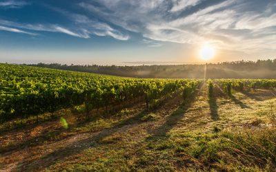 Mejora del rendimiento de las cosechas con fertilizantes orgánicos.
